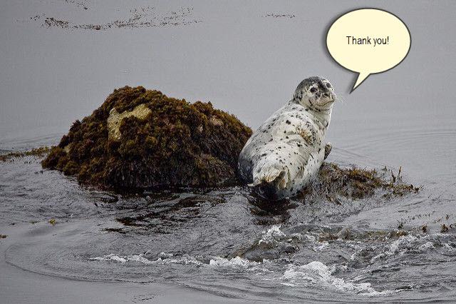 seal thanks